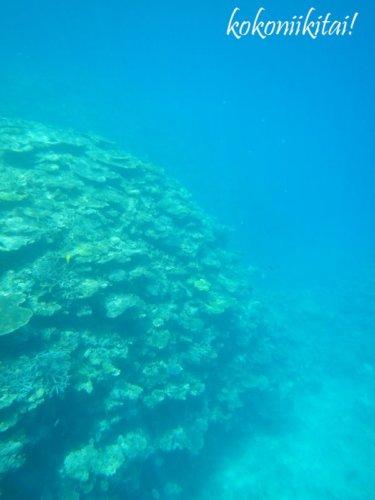 加計呂麻島、実久、シュノーケリング、サンゴ礁