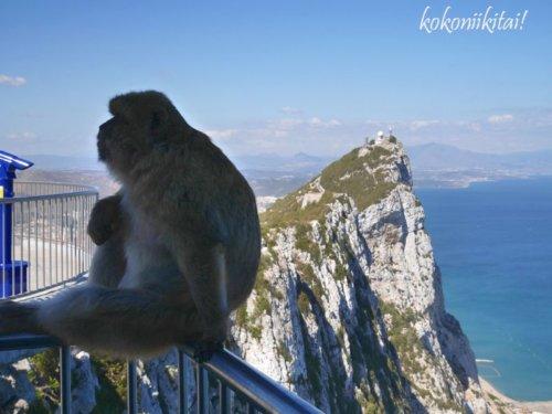 ジブラルタル、ロープウェー、猿