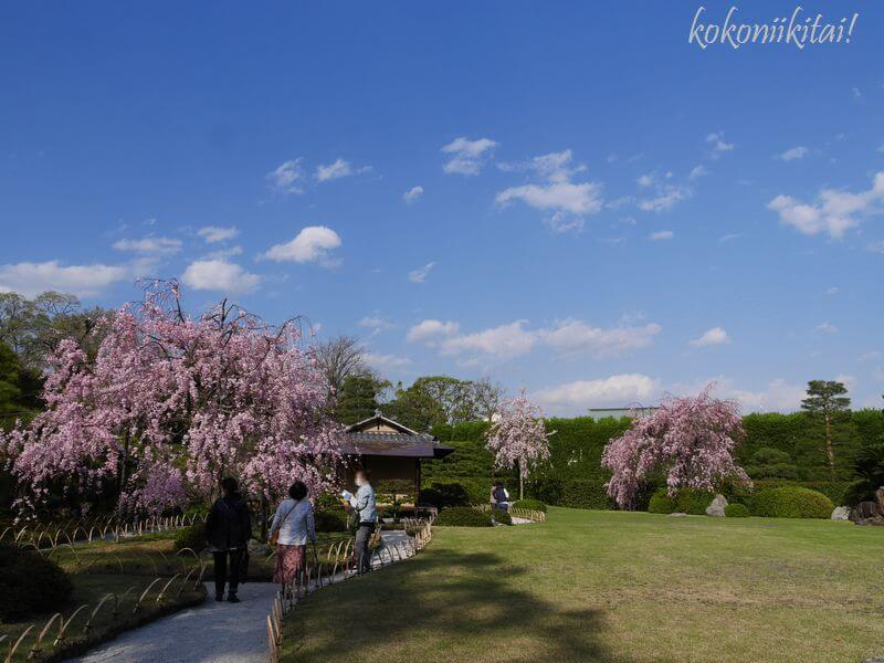 京都、城南宮、しだれ桜