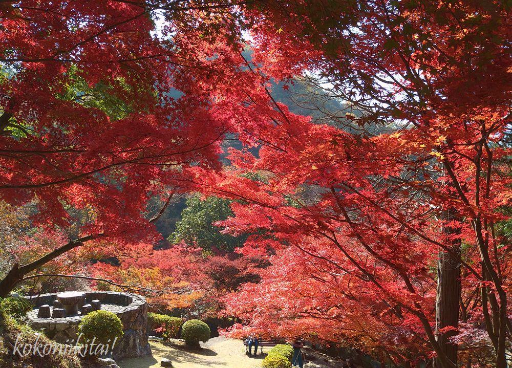 兵庫県たつの市東山公園の紅葉