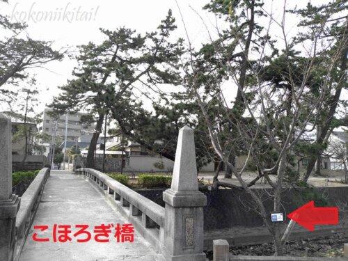 夙川こほろぎ橋の西宮市オリジナルの花の夙川舞桜