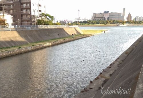 夙川の河口