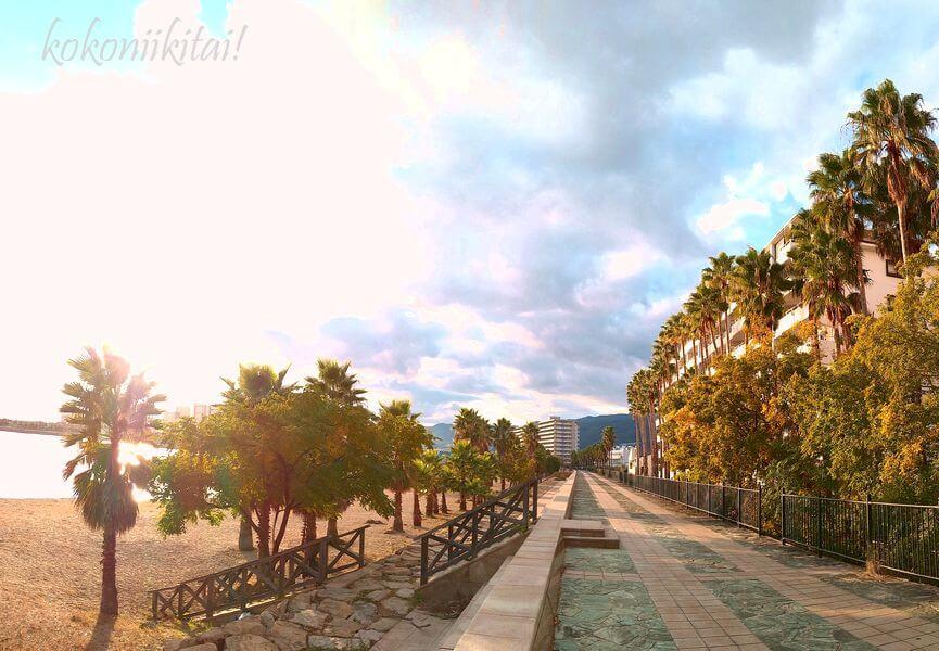 西宮市の西宮浜・御前浜・香櫨園浜の遊歩道ヤシの木