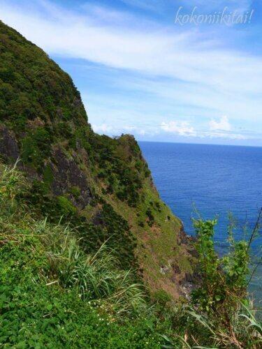 奄美大島の大金久ふれあいパーク展望台からの眺め眺望・ソテツの群生