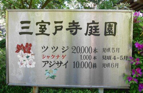 京都宇治の三室戸寺つつじアジサイの本数