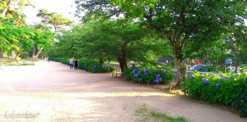 夙川公園・苦楽園のアジサイ