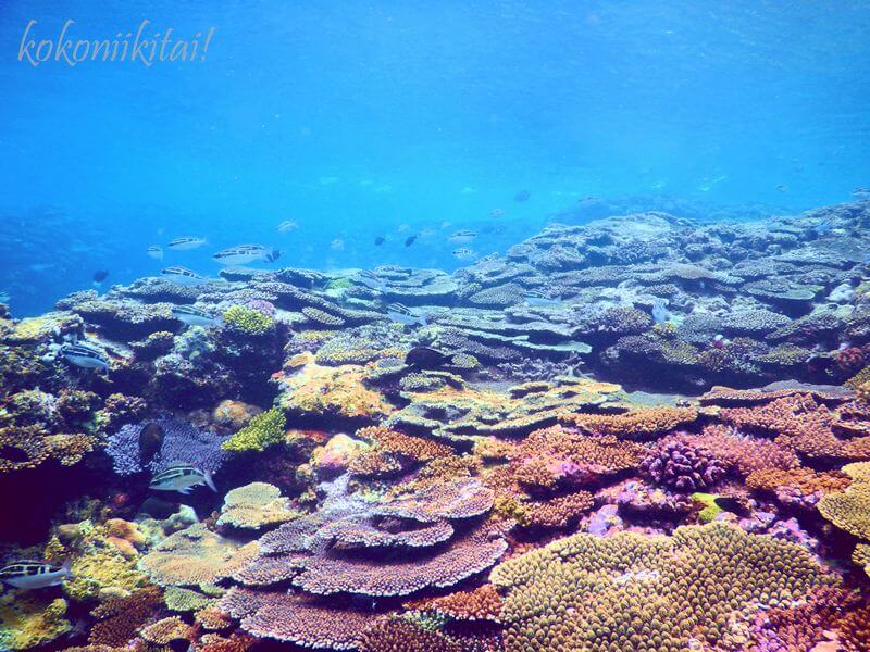 沖縄今帰仁村の崎山ビーチシュノーケル珊瑚礁