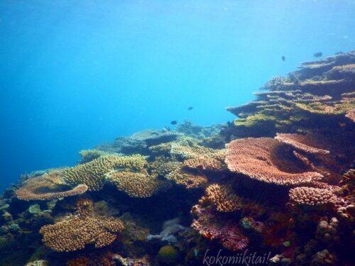 国頭村謝敷海岸シュノーケル珊瑚礁