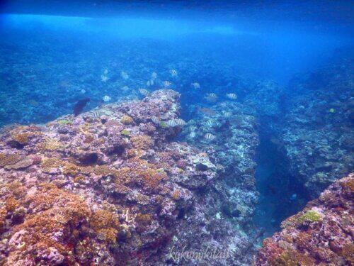 辺戸岬の宇佐浜の珊瑚礁